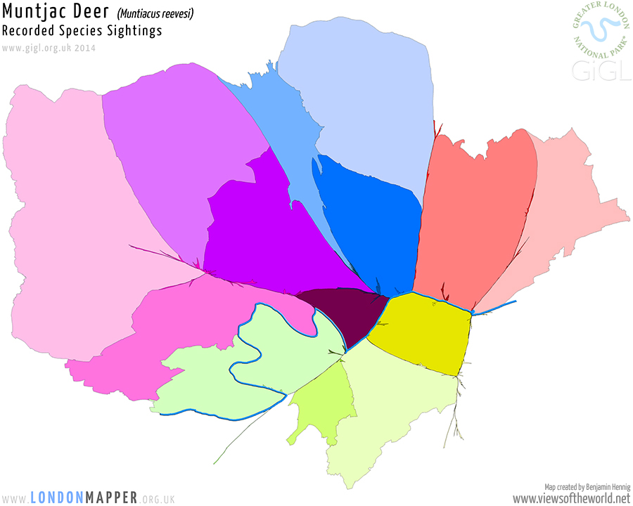 London Species Map: Muntjac Deer